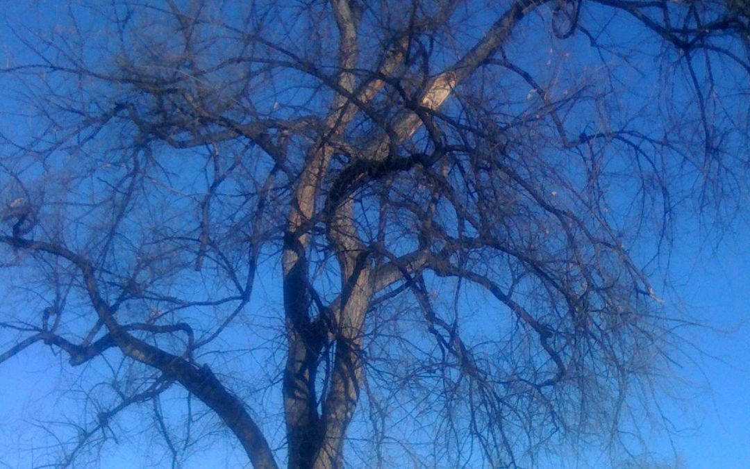 Expert Tree Service Offers Tree Removal Services in Englewood, CO