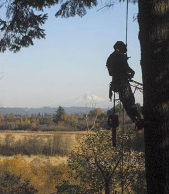 Tree Care Company  In Lakewood, CO Offer Tree Removal Permit Help