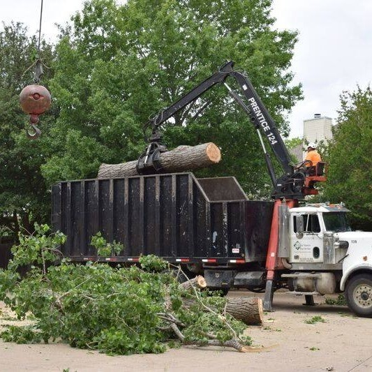 Tree Care Experts In Denver, CO Offer Dangerous Tree Removal Service