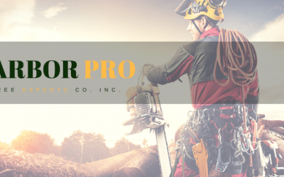 Welcome to the new Arbor Pro Tree Experts' Blog!
