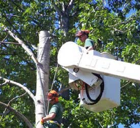 Professional Tree Company Serves Arvada, CO
