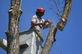 Golden, CO Arborist Is Available For Tree Risk Assessment Services