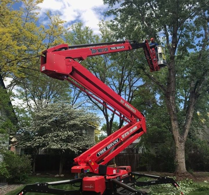 Lakewood Tree Care Company Offers Expert Tree Removal Tips